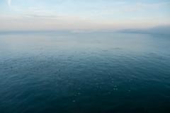 Sea, gulls and fog