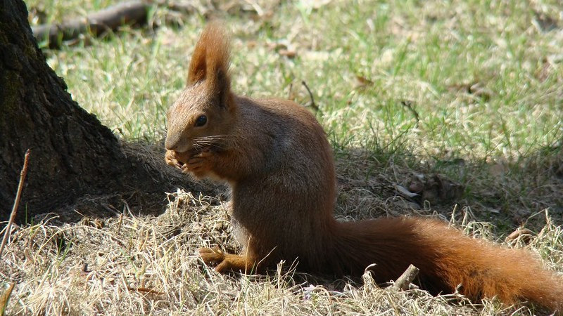 Dorothy's squirrel