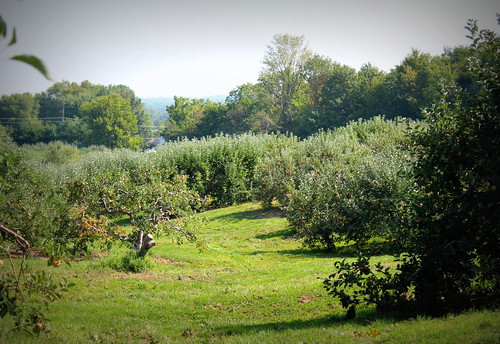 20120825. Anderson Orchard.