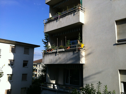 My balcony, early July, with Quintus