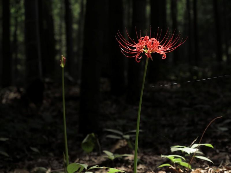 Flore locale Yun Qi Zhu Jing