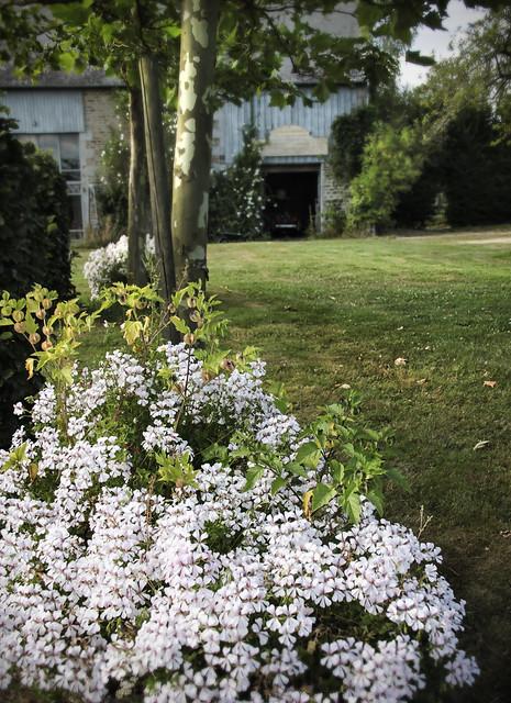 Le Château - garden