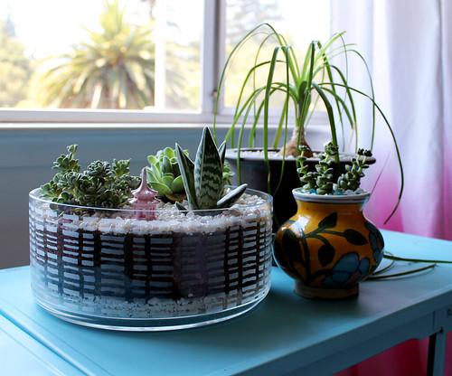 Dish Garden DIY - VitaminiHandmade
