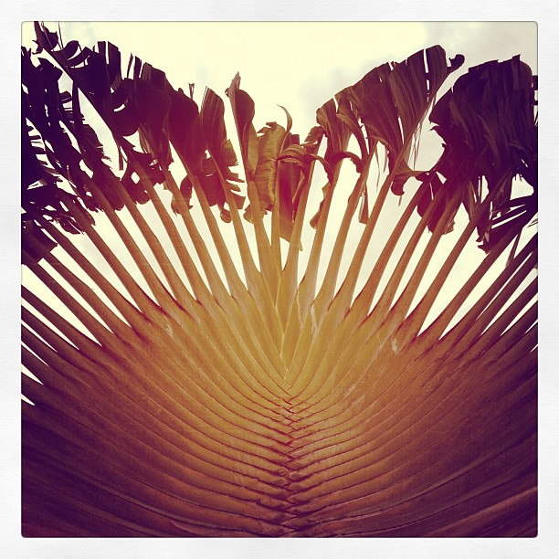 Domingo tropical VI #panamá #gamboa