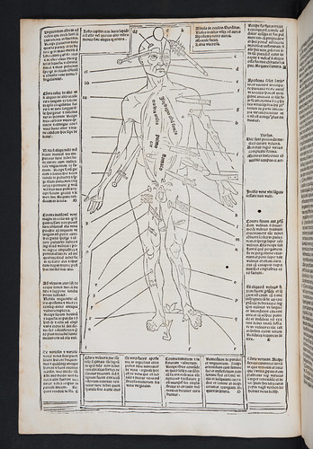 Woodcut medical illustration from Ketham, Johannes de: Fasciculus medicinae