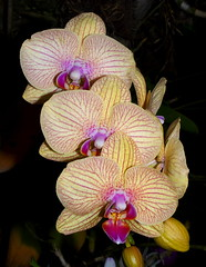 Orchids are just too cool !!