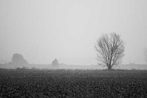 bw tree landscape lone leafless scavengechallenge scavchal 112in2012