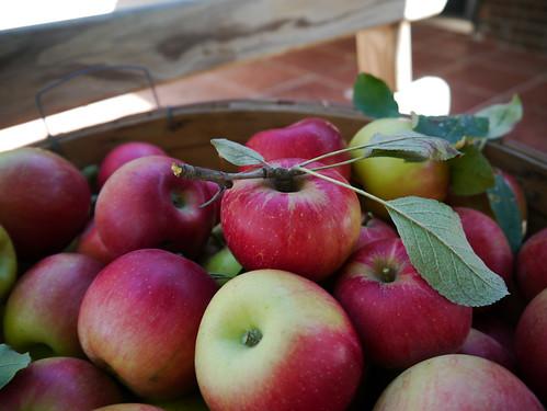 2012-09-08 - Apples - 0011