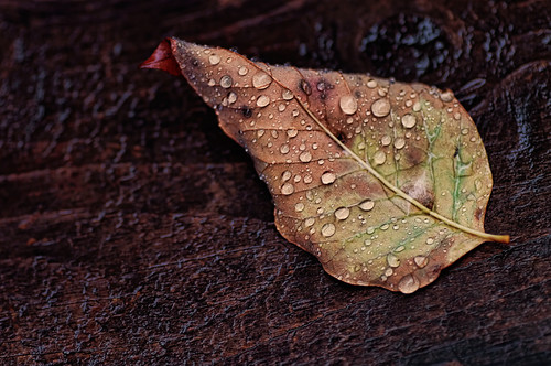 After the Rain by John Q6