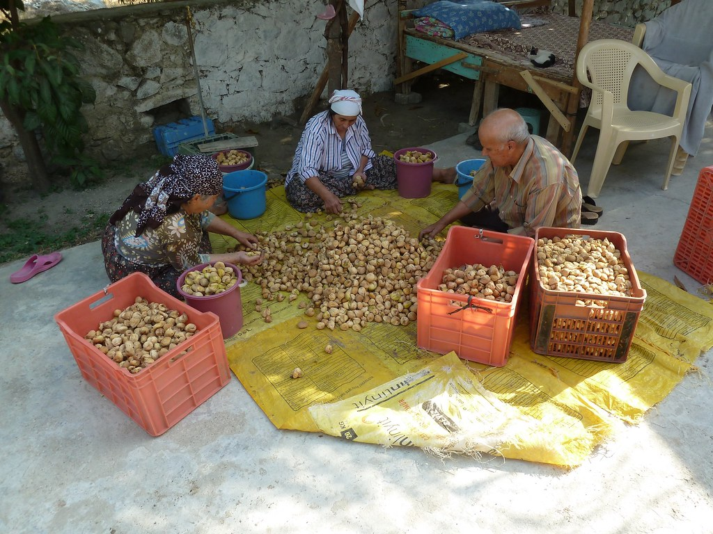 Sorting dried figs