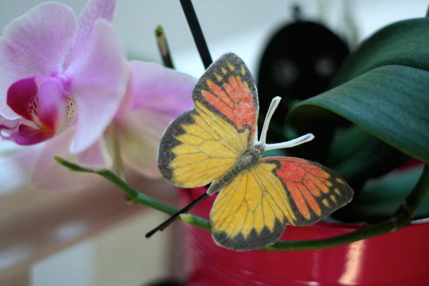 barette-papillon