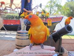 A friendly Sun Conure at LA County Fair - 2012-231