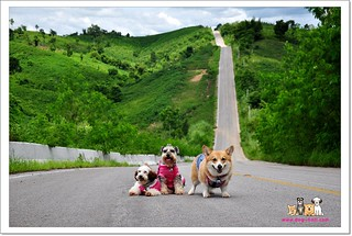 Phurua-Chiangkhan-Trip-with-dogs_E11005077-038