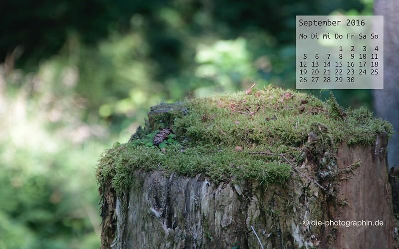 baumstumpf_september_kalender_die-photographin