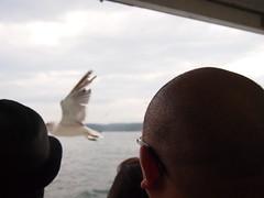 Bald Head Over the Sea Gull