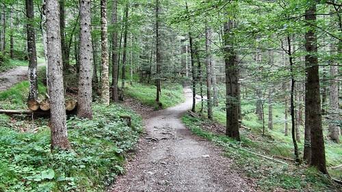 Waldweg-Heimgarten
