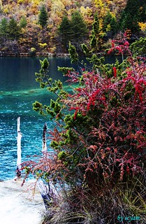 jiuzhaigou,china