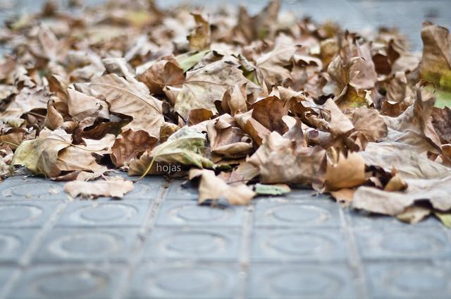 313/366: hojas