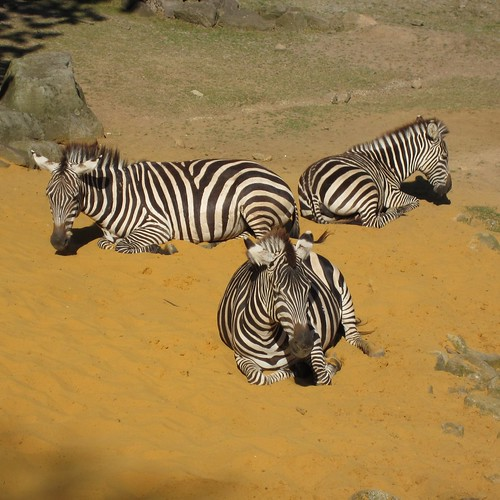 ZEBRAs' threesome