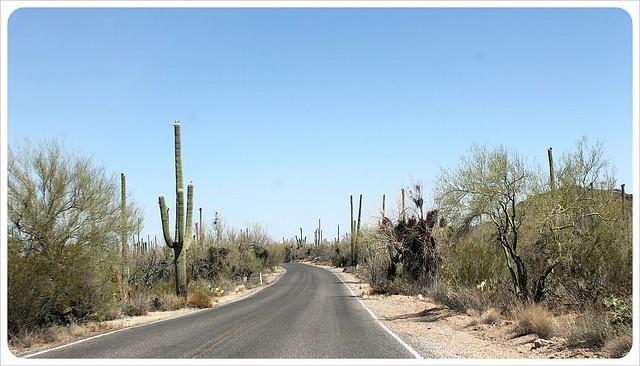 southern arizona cactei