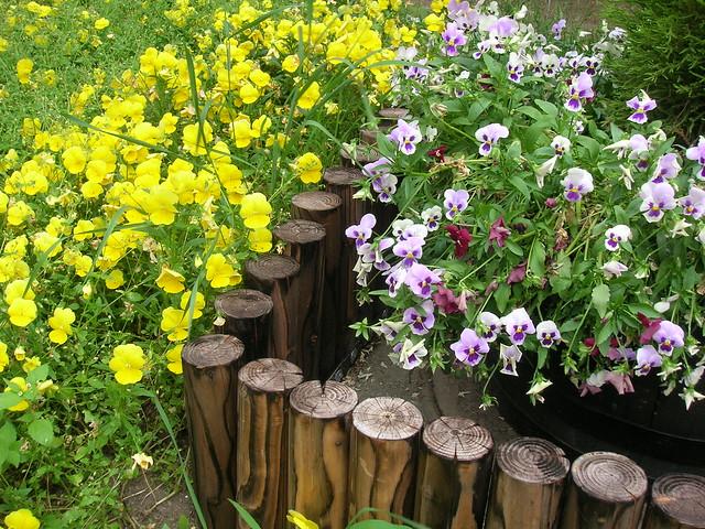 day3-odori-park-flower4
