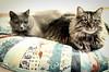 Floor pillow or cat bed?