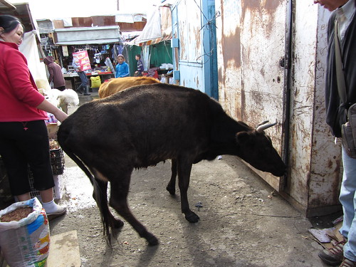 cow in the market