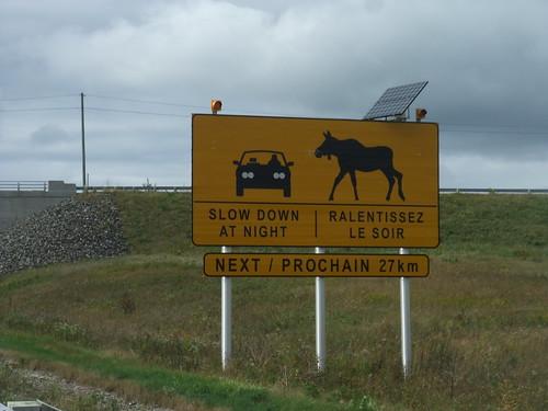 moose warning NB