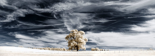 wallpaper sky tree field clouds landscape ir infrared 木 风景 树 壁纸 ツリー 樹 mytree maxmaxcom पेड़ वृक्ष xnitecanong9 樹樹 柅 柂