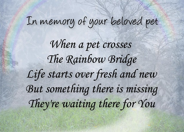 picture about Rainbow Bridge Pet Poem Printable identify Rainbow Bridge Memorial Poem For Cats Tile Offers of the Working day
