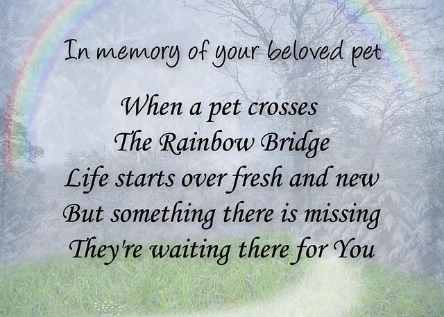 image relating to Rainbow Bridge Pet Poem Printable identified as Rainbow Bridge Memorial Poem For Cats Tile Estimates of the Working day