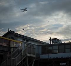 Endeavour Ferry Flight (201209190008HQ)