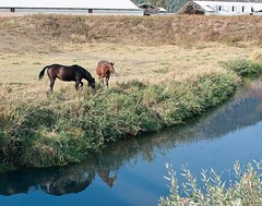 Horses grazing near a stream!-.jpg
