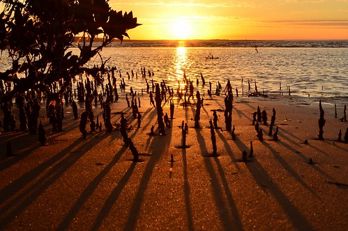 light sunset sea sun beach bay coast nikon shadows australia victoria shore vic mangroves sunbeam gippsland jamjerrup westernportbay d5100 nikond5100 phunnyfotos