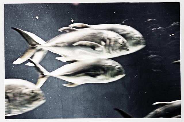 Fish at the Georgia Aquarium