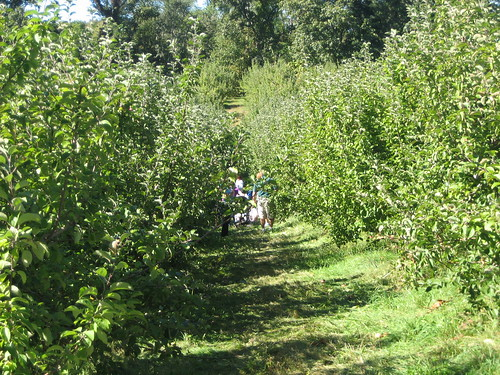 IMG_5841 Apple Trees Path 2