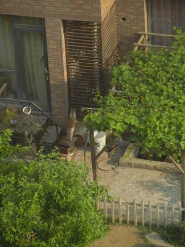 Cat Trying to Catch a Squirrel in Cage, Shenyang, China _ 0016