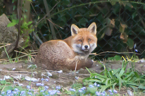 neighbourhood vixen