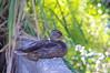 duck slough