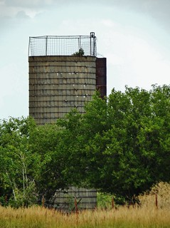 Tree, peeking from silo