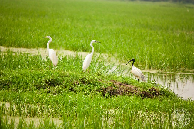 Keoladeo National Park - Best Place in India for Bird Watching