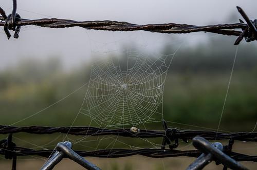 Spider Web_5356.jpg