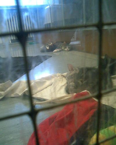 Shelter kittens ^_^