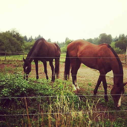 More horses from earlier today.
