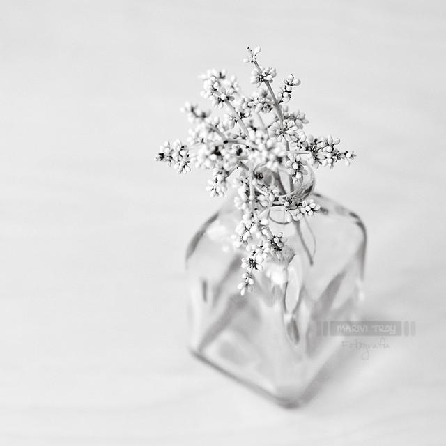 Flores caídas...
