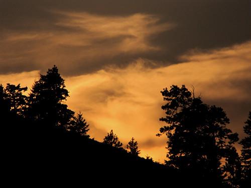 sunset cloud tree silhouette