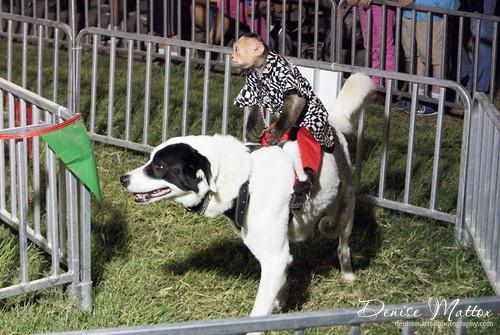 288: Wilson County Fair 2012