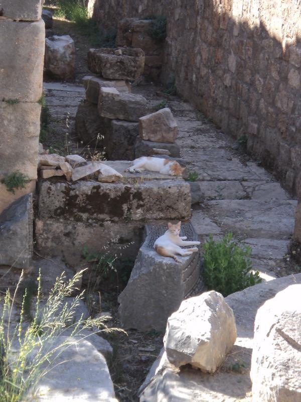 Античный храм обнесен решетчатым забором, и попасть туда могут только кошки :)