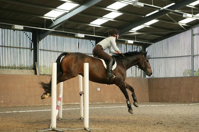 Website - Equine & Horse Management