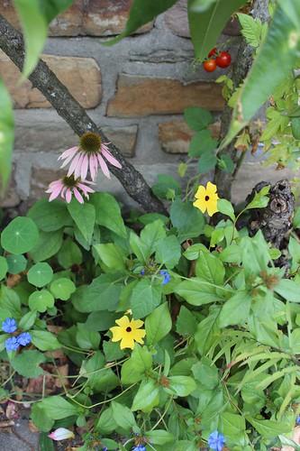 Le jardin de Laurent - Page 3 7883461118_31432a3fa4